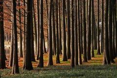 drewno drewna Zdjęcia Stock