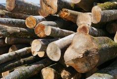 Drewno, drzewny bagażnik, materiał, budowa, las Zdjęcia Royalty Free