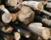 Drewno, drzewny bagażnik, materiał, budowa, las Fotografia Stock