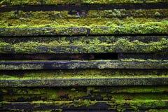 Drewno i grzyb fotografia stock