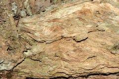 Drewno jako tło Obraz Royalty Free