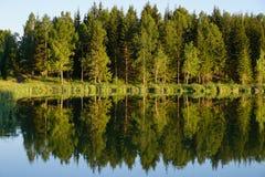 Drewno mirrowed w jeziorze zdjęcia stock