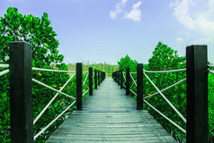 Drewno most wzdłuż Namorzynowego lasu Zdjęcie Stock