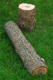 drewno na Obraz Stock