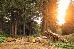 Drewno notuje dalej las zdjęcia stock