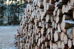 Drewno notuje dalej las Zdjęcie Royalty Free