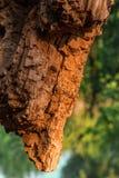 Drewno sąsiki pod soplenem Zdjęcie Stock