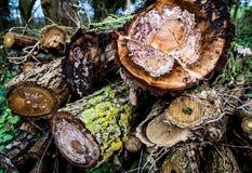 Drewno stosu szczegół Zdjęcie Stock