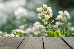 Drewno tarasowej i zielonej trawy pole w ranku czasu use jako natura Obrazy Royalty Free
