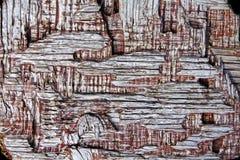Drewno textured tło Zdjęcie Stock