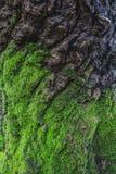 Drewno textured z zielonym mech Zdjęcie Royalty Free