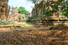 Drewno w świątynnym powikłanym Angkor Wat Siem Przeprowadza żniwa, Kambodża fotografia stock