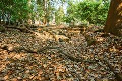 Drewno w świątynnym powikłanym Angkor Wat Siem Przeprowadza żniwa, Kambodża zdjęcie royalty free