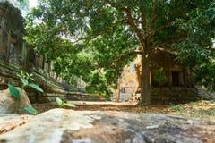 Drewno w świątynnym powikłanym Angkor Wat Siem Przeprowadza żniwa, Kambodża obrazy stock