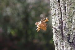 Drewno w jesieni po deszczu fotografia royalty free