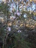Drewno w kwiacie Zdjęcia Stock