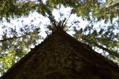 Drewno w lesie Zdjęcie Royalty Free