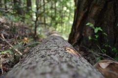Drewno w lesie Zdjęcia Stock