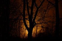 Drewno w mgle przy nocą Zdjęcia Stock