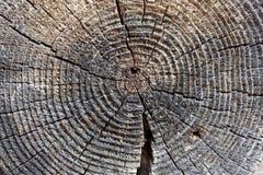 Drewno w sekci teksturze, antyczny fiszorka zakończenie, przekrój poprzeczny drzewny, ciie starą belę, brown ciemny stary drzewo, zdjęcia stock