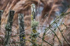 Drewno z mechatym i liszajami Zdjęcia Royalty Free