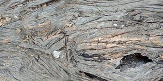 Drewno z teksturą, Lakhnadon India, obrazek brać na Luty 2018, kształtuje teren tło Obrazy Royalty Free