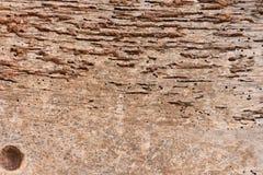 Drewno z termitami Zdjęcia Stock
