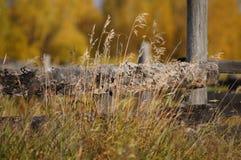 Drewno za ogrodzeniem zdjęcie royalty free