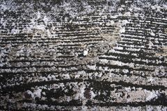 Drewno zbożowa tekstura obrazy stock