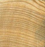 Drewno zbożowa tekstura, sosnowy drewno tekstura drewno, drewno adra, krzyżuje cięcie Fotografia Royalty Free