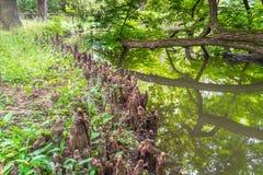 Drewno zgina w zatoczce w drewnach Zdjęcie Stock