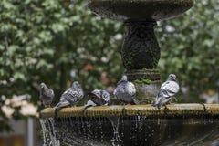 Drezdenko - parco miniatura Fotografia Stock Libera da Diritti
