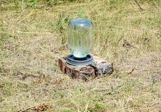 Dricka bunken för bin Dricka bunken från tre-liter en glass krus och plattor Bevattna för kryp Arkivfoto