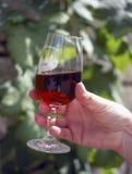 dricka glass wine Fotografering för Bildbyråer