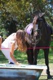dricka häst Royaltyfri Fotografi