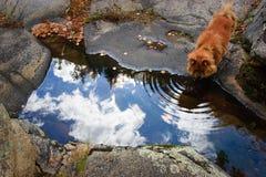 dricka sky Royaltyfri Foto