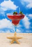 dricker tropiskt Fotografering för Bildbyråer