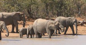 Dricksvatten för afrikanska elefanter - Sydafrika