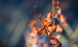 Dride Leaf. Beginning of Spring, Leaves are dying to be reborn again stock images