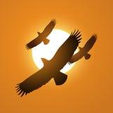 Drie adelaars boven de zonsondergang het vliegen illustratievector Royalty-vrije Stock Fotografie
