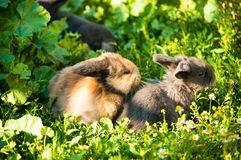 Drie babykonijnen Royalty-vrije Stock Foto