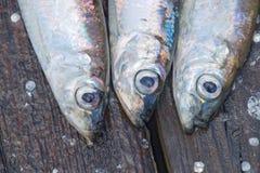 Drie Baltische haringen - close-up Stock Foto