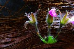 Drie beautys in het hout Royalty-vrije Stock Afbeelding