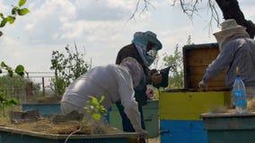 Drie beekeepers controleren van alle details in hun bijenkorf stock video