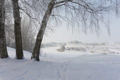 Drie berkbomen in de aard in de winter royalty-vrije stock afbeelding