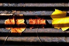 Drie bladeren met schaduwstrepen Stock Afbeeldingen