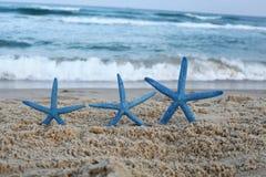 Drie blauwe stervissen op het strand stock afbeelding