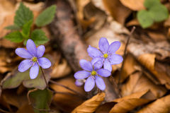 Drie bloemen Stock Afbeeldingen