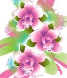 Drie bloemenorchideeën Stock Fotografie