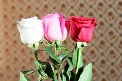 Drie bloemenrozen Royalty-vrije Stock Afbeeldingen